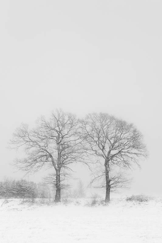 Lonely tree(s)